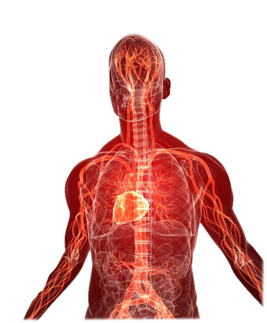 electricity through your body