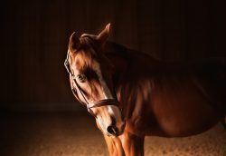 Blood Circulation Impacts Your Horse's Health How?